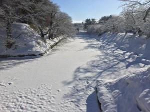 雪桜ワークショップ現場の様子