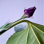 煙石紘子 Leaf